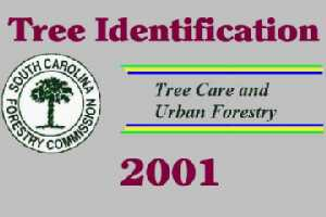 Urban and Community Forestry - SC Forestry Commission